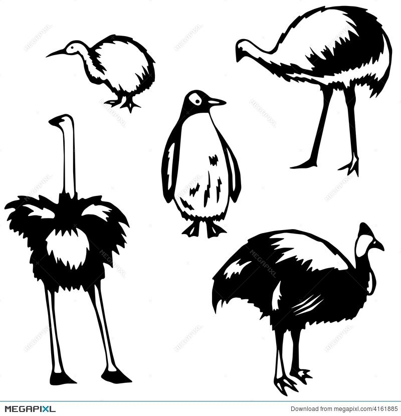 flghtlssbirds